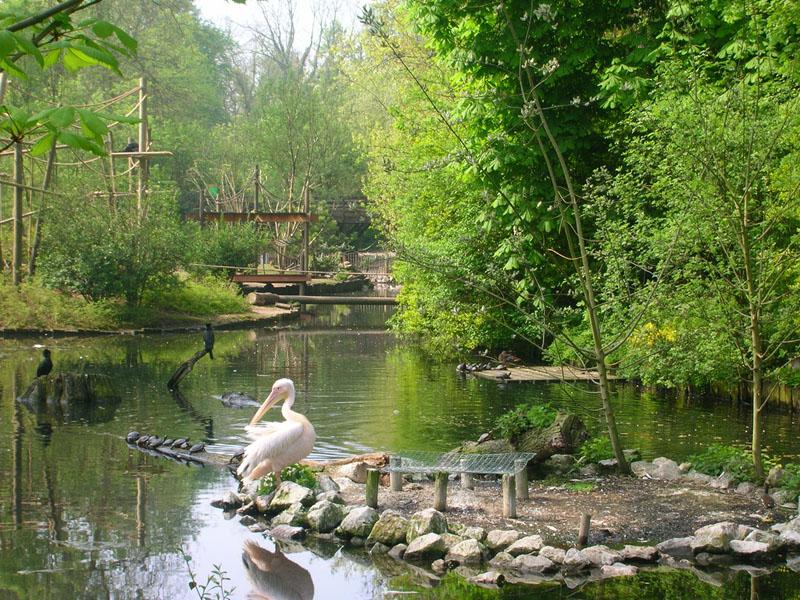 Зоопарк Лилль